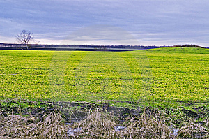 Field, Tree, And Hill Stock Photography - Image: 5735572
