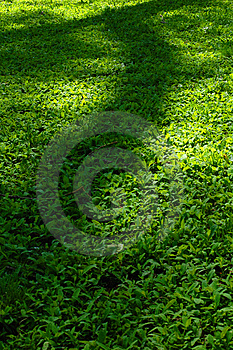 Gras U. Schatten Stockfotografie - Bild: 5737042