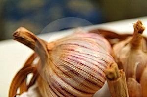 Big Garlic Stock Image - Image: 5737231