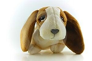 Sad Brown Puppy Stock Photo - Image: 5738950