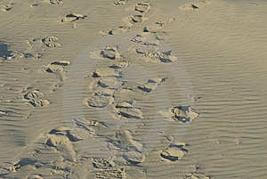 Footsteps Stock Images - Image: 5745274