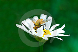 Fly Royalty Free Stock Photos - Image: 5752448