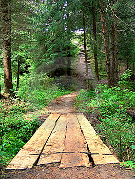 The Bridge In A Wood Royalty Free Stock Photography - Image: 5753117
