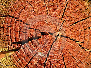 Sunlit Reddish Cross-section Of A Tree-trunk Royalty Free Stock Image - Image: 5757276