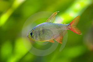 Small Fish On Green Royalty Free Stock Photography Image