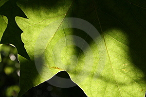 Abstract Leaves 3 Stock Photography - Image: 5767572