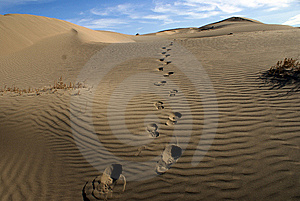 Human Trail In The Sand Stock Photography - Image: 5774982