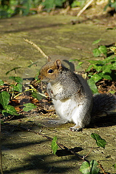 Squirrel Stock Photos - Image: 5790603