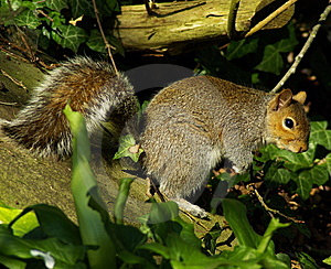 Squirrel Stock Photography - Image: 5790612