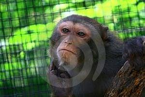 Monkey Stock Photography - Image: 5790932
