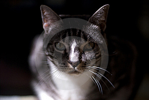 Stalking Cat Royalty Free Stock Photography - Image: 5799687