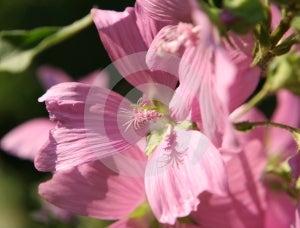 Macro Of Stamen In Wild Flower Stock Photo - Image: 585130