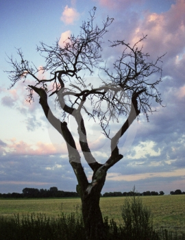 Leafless Tree Royalty Free Stock Photos - Image: 588048