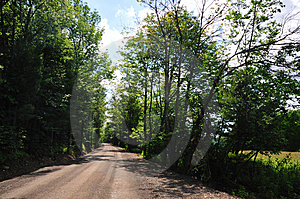 Leafy Road - Horizontal Stock Image - Image: 5801461