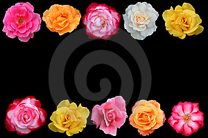 Collage Of Beautiful Rose Blossoms, Royalty Free Stock Photo - Image: 5801575