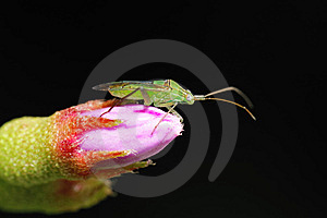 Grasshopper On Pink Flower Stock Photos - Image: 5815523