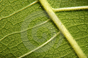 Leaf Structure Stock Photo - Image: 5819340