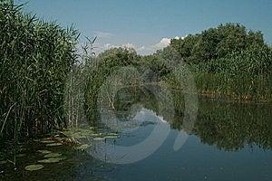 Vegetation Royalty Free Stock Photo - Image: 5830075