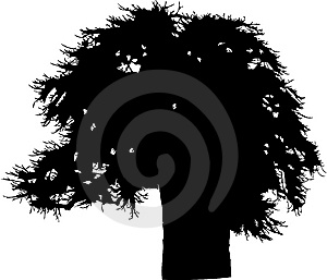 Isolated Tree - 38. Silhouette Stock Photography - Image: 5840172