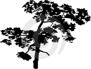 Isolated tree - 40. Silhouette