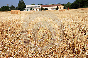 Hay Field Royalty Free Stock Image - Image: 5860446