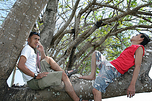 Two Man Enjoy On Tree Royalty Free Stock Images - Image: 5861449