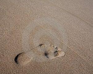 Footprint On Beach Royalty Free Stock Image - Image: 5862886