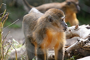 Monkey Stock Photography - Image: 5868402