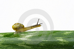 Snail Walking On A Leaf Stock Images - Image: 5875774