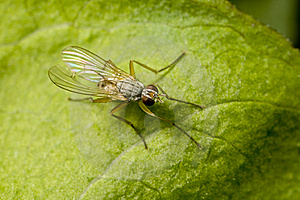 Small Fly Perched On Leaf Stock Images - Image: 5878204