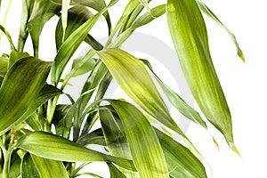 Bamboo Royalty Free Stock Photos - Image: 5878588
