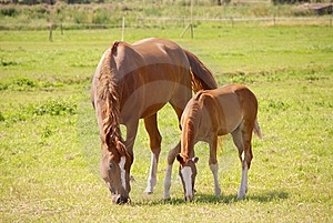 Horses Royalty Free Stock Photos - Image: 5886368