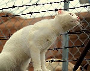 Curious Cat Royalty Free Stock Photos - Image: 5896698