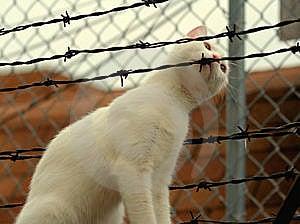 Curious Cat Stock Photo - Image: 5896750