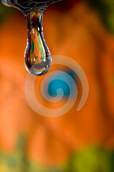 Spring Drop Royalty Free Stock Photography - Image: 591667