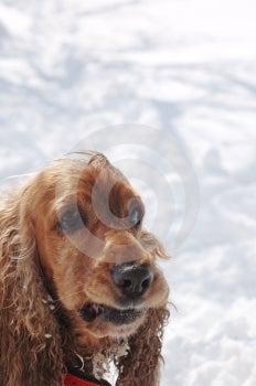 Fun In The Snow 2 Stock Photos - Image: 592223