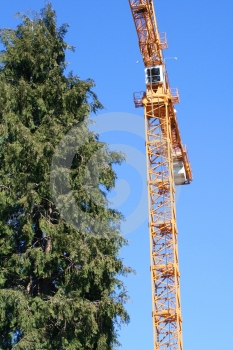 Yellow Crane And Tall Tree Stock Images - Image: 597734