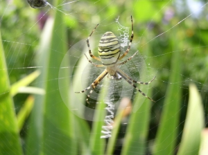 Spider Stock Images - Image: 598604