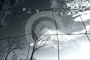 Through The Grating Stock Images - Image: 599234