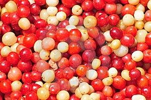 Fruit Stock Images - Image: 5906094