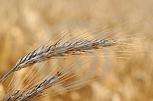 Cereal Royalty Free Stock Images - Image: 5916079