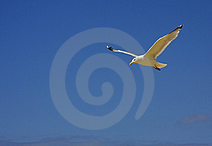 Seagull On The Beach Royalty Free Stock Photography - Image: 5935857