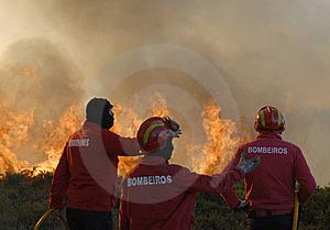 Firefighters Stock Photos - Image: 5945773