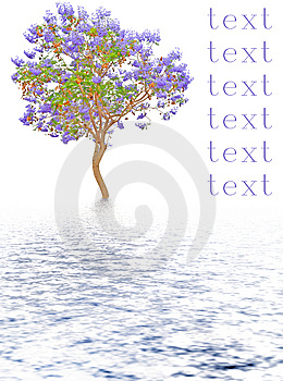 Reflected Tree Royalty Free Stock Photos - Image: 5947478
