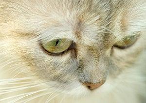 Cat Royalty Free Stock Photo - Image: 5947625