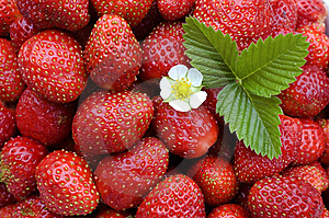 Strawberry. Royalty Free Stock Images - Image: 5951819