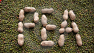 """""""PEA"""" On Mung Beans Stock Image - Image: 5954341"""