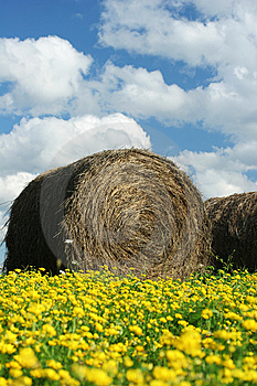 Round Hay Bale In Field Royalty Free Stock Image - Image: 5963646