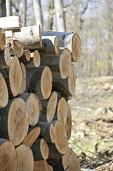 Woodpile Stock Photography - Image: 5970002