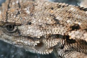 Lizard Stock Photos - Image: 5973773